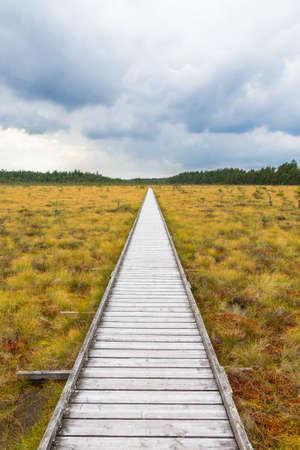 moor: Nature trail to a wooden footbridge across a moor