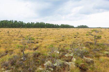 bog: Bog landscape at a woodland Stock Photo
