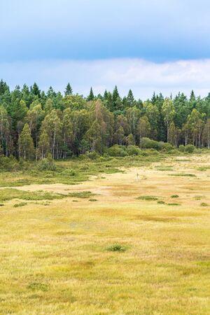 bog: Bog landscape at the woods