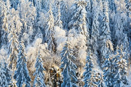 white view: Winter in the forest with snow on spruces Stock Photo