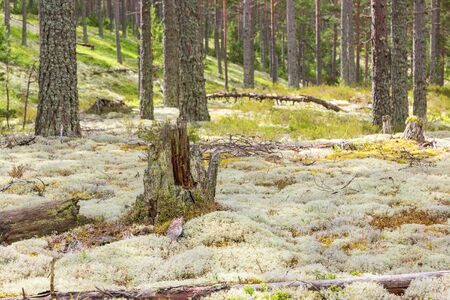 tree stump: Tree stump in woods landscape