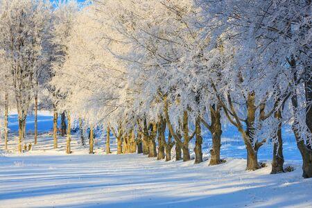 hoarfrost: Beech trees with hoarfrost in a winter landscape