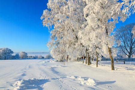 huellas de animales: paisaje de invierno con huellas de animales en la nieve Foto de archivo
