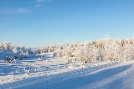 hoarfrost: Winter landscape with trees with hoarfrost Stock Photo