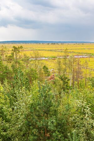 bog: Trees on a bog with storm clouds Stock Photo