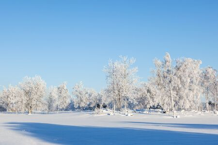 tree in field: Winter forest with hoarfrost covered trees
