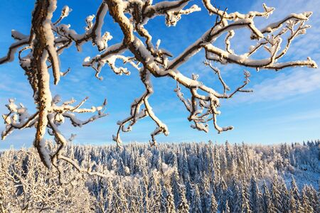 aerial view: Branches with snow