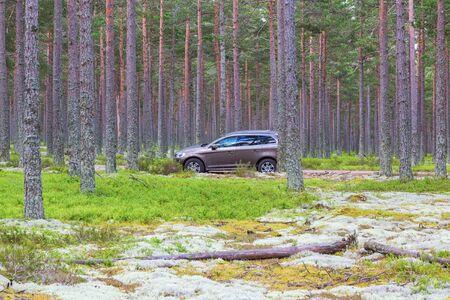 숲에 주차 된 자동차