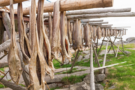 stockfish: Stockfish on racks to dry