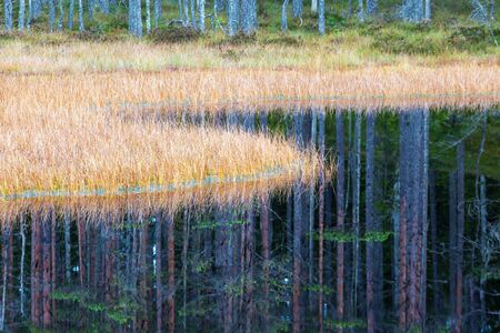 water's edge: Forest Pond with grass at waters edge