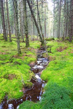 treetrunk: Small creek running through moss in woods