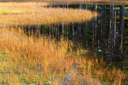 turf bog: Forest lake with grass and reflections in the water