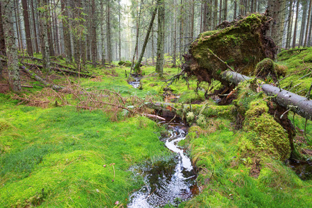 Fallen trees in the forest by a creek Stock Photo