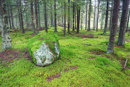 treetrunk: Stone in coniferous forests with moss Stock Photo