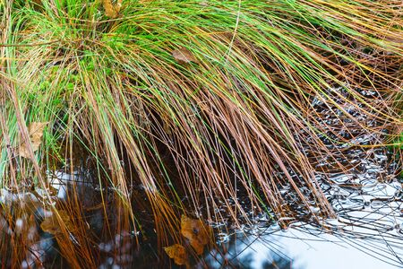 low angle views: Tuft of grass at the waters edge