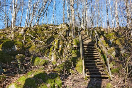 treetrunk: Hiking trail in the woods with a long staircase