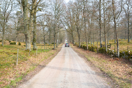treetrunk: Car on gravel road in the deciduous forest in spring Stock Photo