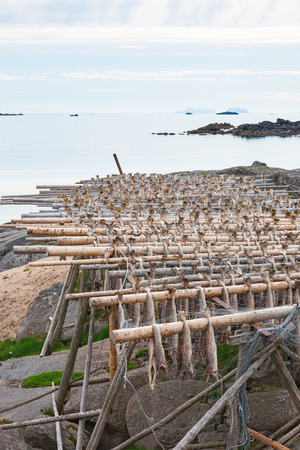 stockfish: Stockfish drying outside on a rack at the seaside