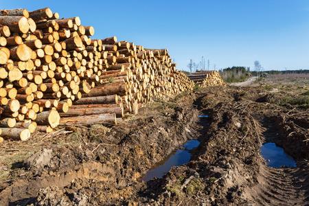 deforestacion: Vehicle Damage to a depots for timber at the deforestation Foto de archivo