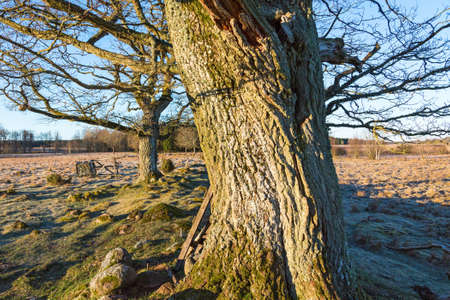 treetrunk: Bark of a tree in spring landscape