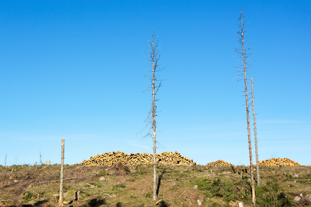 treetrunk: Clearcut area with timber in heaps