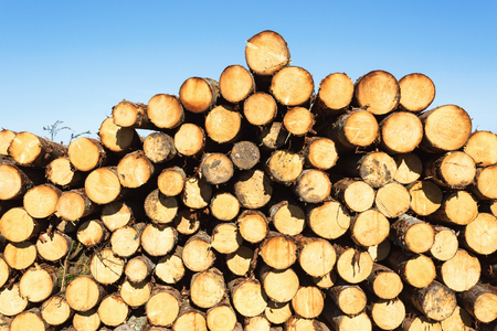 treetrunk: Timber pile in the woods Stock Photo
