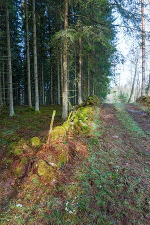 treetrunk: Stone wall at the spruce forest and the dirt road
