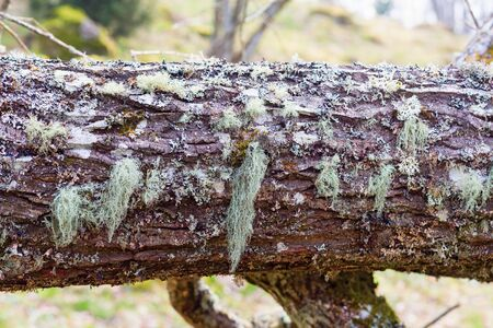 treetrunk: Moss and lichen on a log