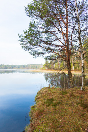 water's edge: Trees at the waters edge on the bog Stock Photo