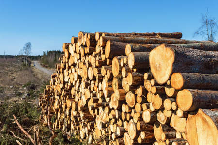 treetrunk: Timber at the edge of the clear-cut area Stock Photo
