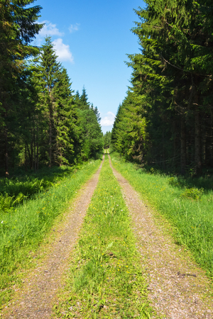 treetrunk: Grass shoulder road with spruce trees lined Stock Photo