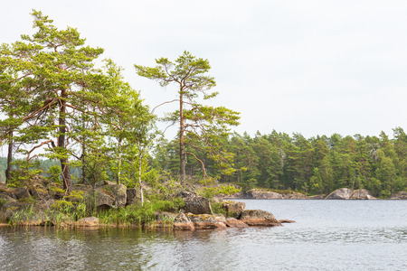 lake beach: Islands with the pine tree forest