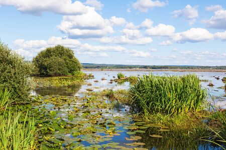 water lilies: View of a lake with yellow water lilies