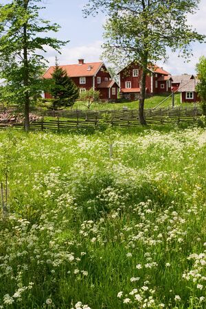 farmstead: Summer meadow at the countryside Stock Photo
