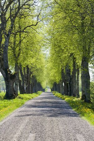 single lane road: Country road avenue in spring Stock Photo