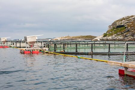 pisciculture: Fish farming in cages in the sea at the coast