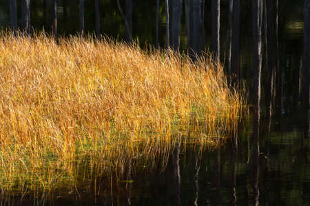 Grass at waters edge of the forest pond