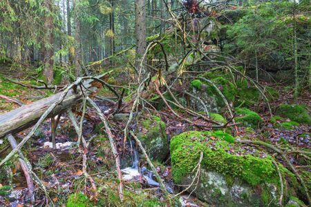 Old tree trunk in a primeval forest