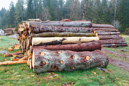 felled: Felled trees in a pasture