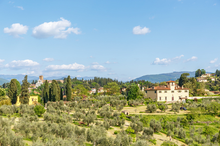 Olive farms in the countryside in Italy
