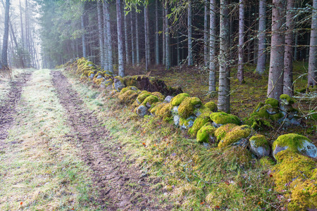 treetrunk: Forest road at a stone wall