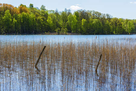 tranquillity: Lake view with reeds on the shore Stock Photo