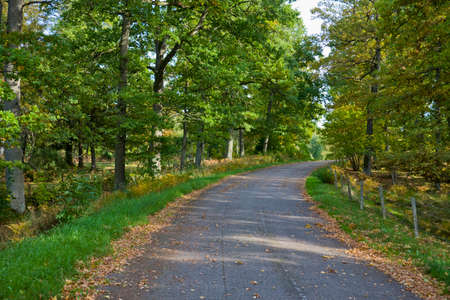 Countryside road in the forest