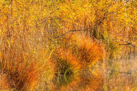 water's edge: Reeds and grass tufts in autumn colors at the waters edge