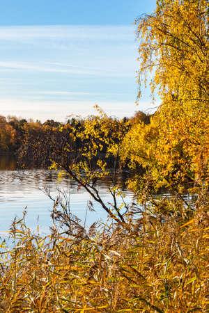 canne: Autunno al lago con canne