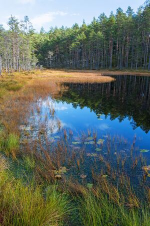 Coniferous forest with a lake in autumn