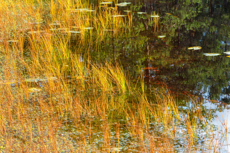 Blades of grass growing in the water at the beach Stock Photo