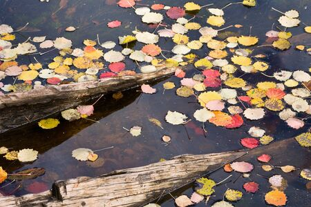 dugout: Autumn leaves on water surface at a sank dugout canoe