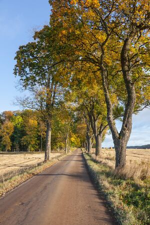 treetrunk: Country road with trees in autumn colors Stock Photo