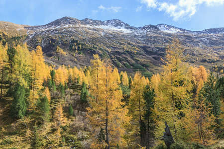 Larch tree forest in the Alp landscape Stock Photo